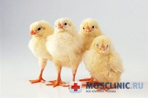 В чем цыплята умнее детей?