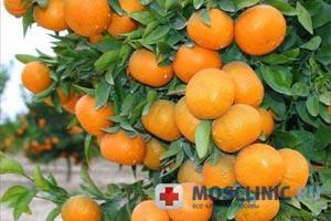 мандарины препятствуют ожирению